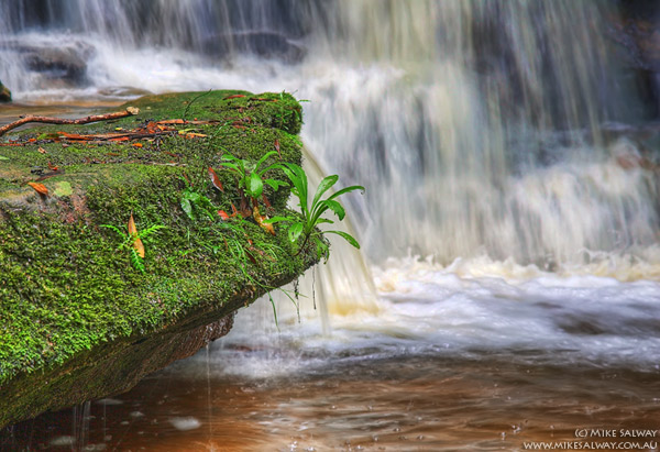 Mossy Rock at the Bottom Falls