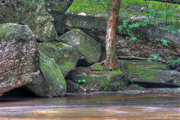 Rocks and Trees at the To pFalls