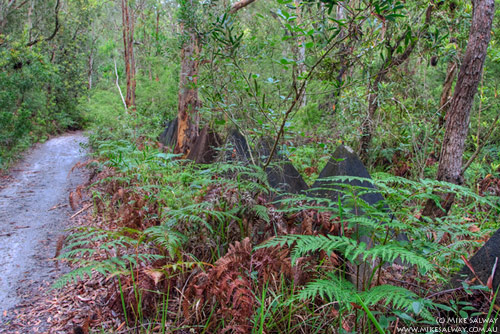 Tank Traps in the Bush