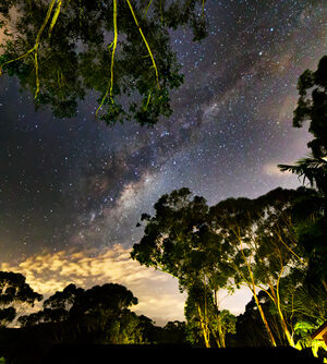 Milky Way between the Trees