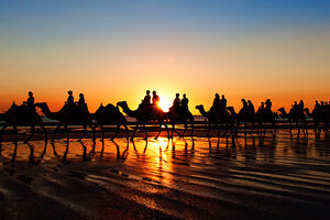 Cable Beach Camel Train