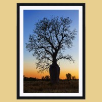 Boab in Twilight Vertical Black Frame White Mat Example