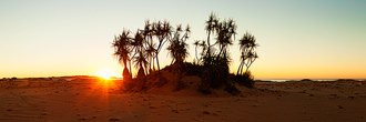 Pandanus Palms at Cape Leveque 2