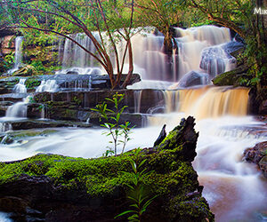 Somersby Falls Stump Panorama