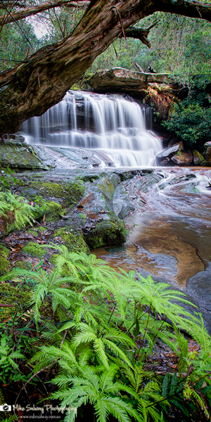 Falls and Ferns